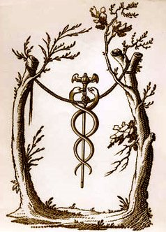 caduceus hanging trees